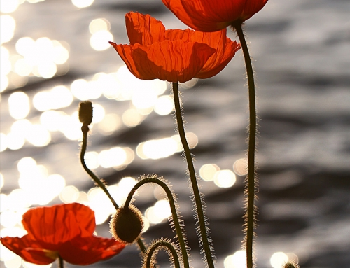 11 INTERESTING FACTS ABOUT REMEMBRANCE DAY