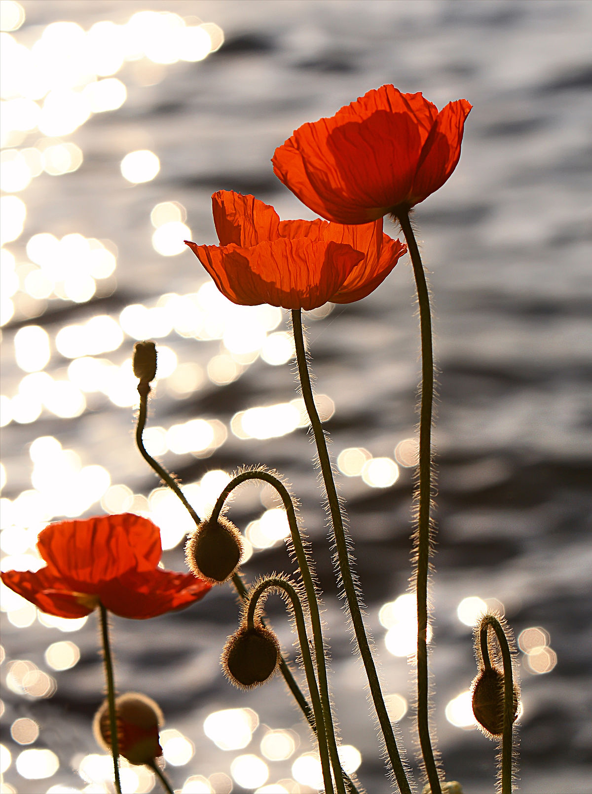 11 Interesting Facts About Remembrance Day Sutton Group Right Way